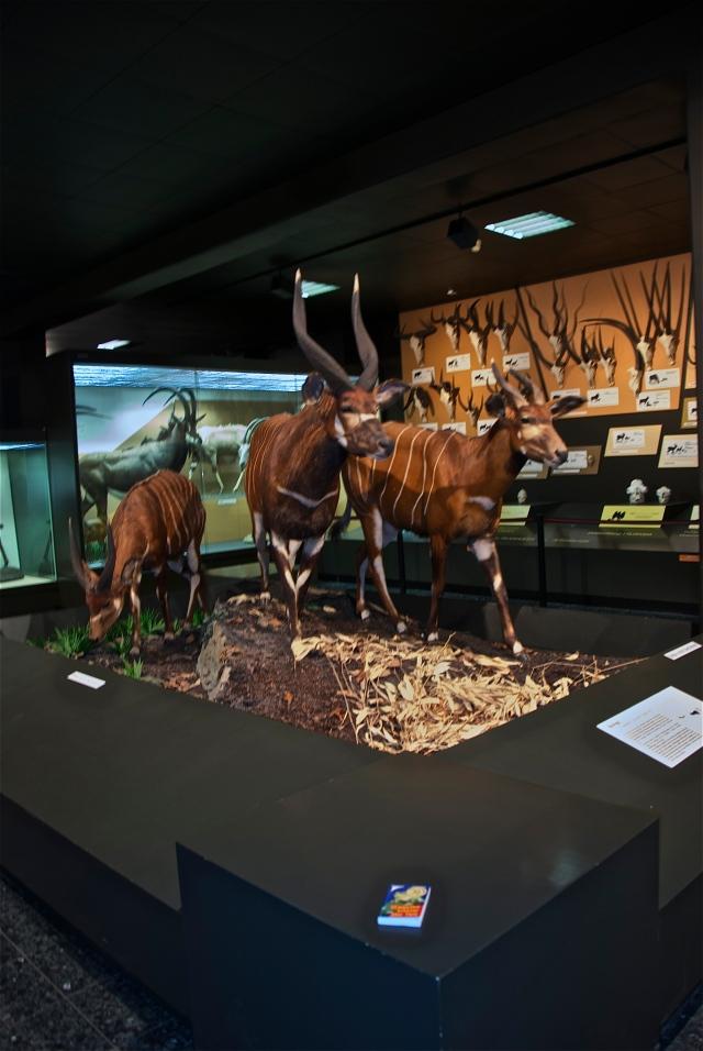 Antilopengruppe