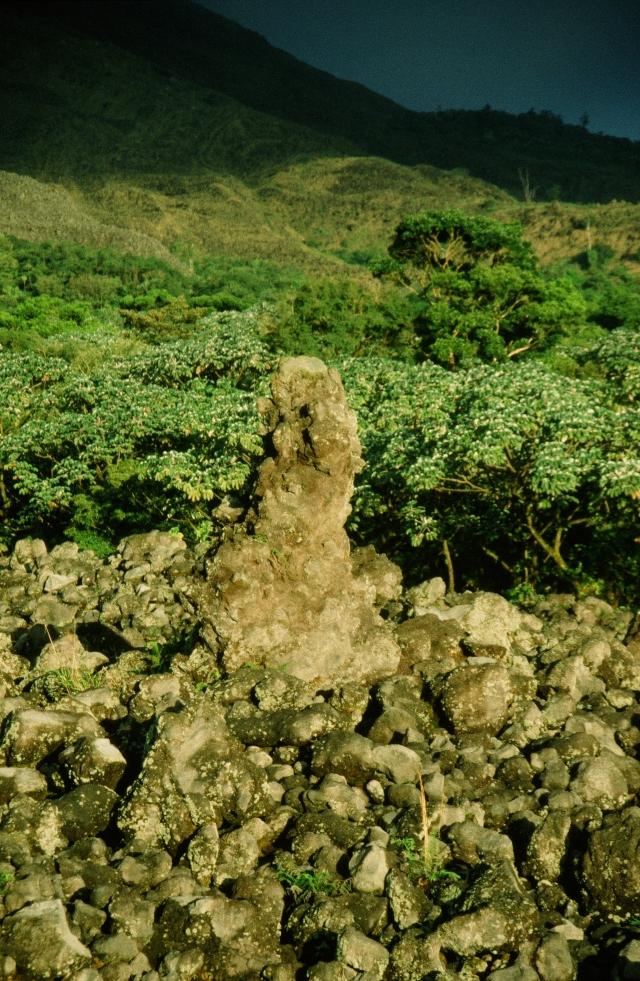 Auf der Lava wächst schon wieder junger Regenwald.