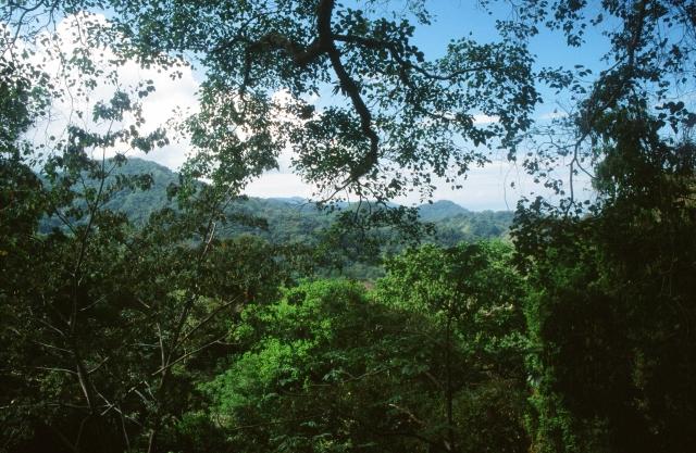 Blick über den Regenwald Richtung Pazifik