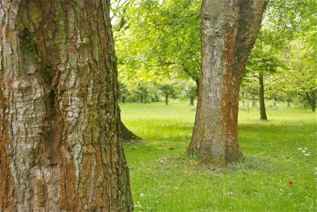 schöner alter Baumbestand