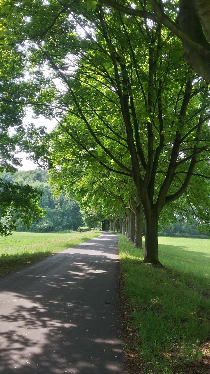 Rheinweg