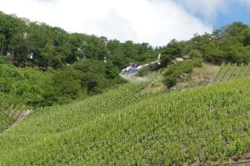 Die Weinberge am Südhang werden